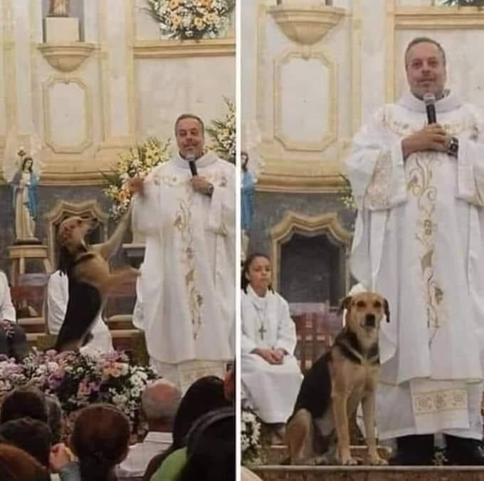 UN RELIGIOSO BRASILEÑO PROMUEVE EN SUS MISAS LA ADOPCIÓN DE PERROS ABANDONADOS
