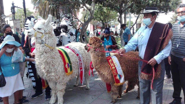 YUNCHARA Y EL PUENTE INVITAN A LA  XI FERIA DEPARTAMENTAL DE CAMELIDOS ESTE SABADO 25 DE SEPTIEMBRE